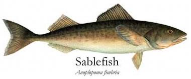 Sablefish7